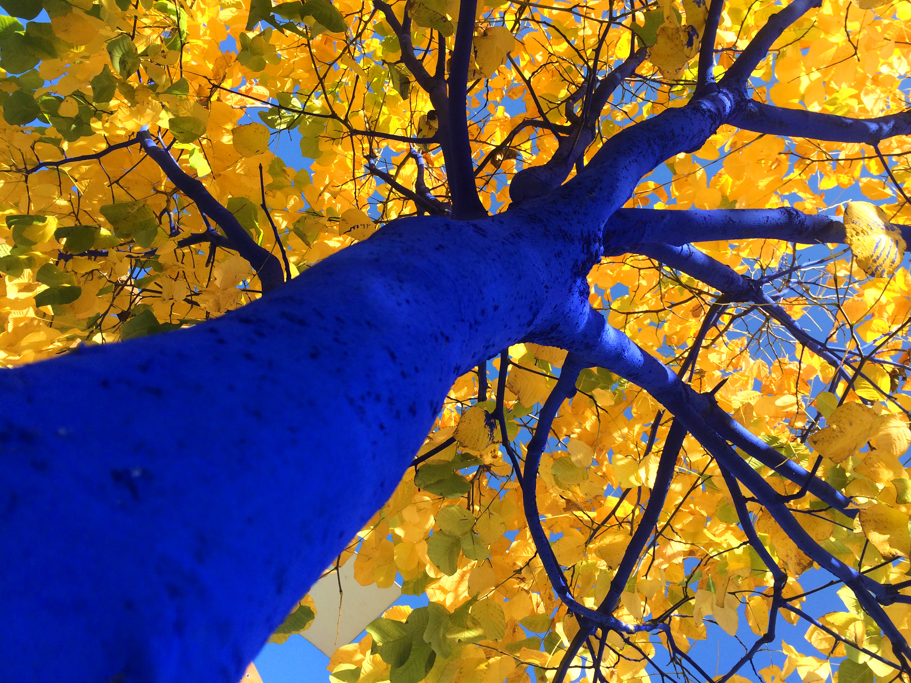 Picture of a Blue tree